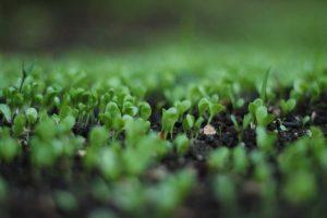 Ant & Garden